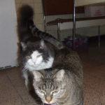 Bludy & Tigra